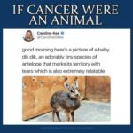 Cute Cancer Memes - dikdik animal