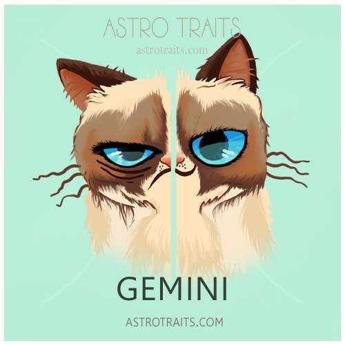 Gemini Grumpy Cat